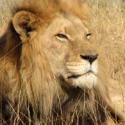 Camping South Africa's Kruger National Park Thumbnail