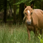 How to go Horse Camping – What You Should Know Thumbnail