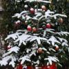 Camping Christmas Wish List Thumbnail