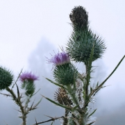 Camping in Scotland Thumbnail