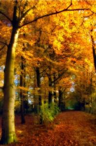 Autumn Camping Tips