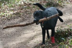 Taking your dog Hiking