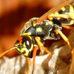Preventing and Treating Insect Bites & Stings