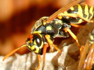 Preventing and Treating Insect Bites and Stings