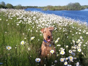 Find Pet Friendly Campsites and Campgrounds