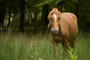 How to go Horse Camping – What You Should Know